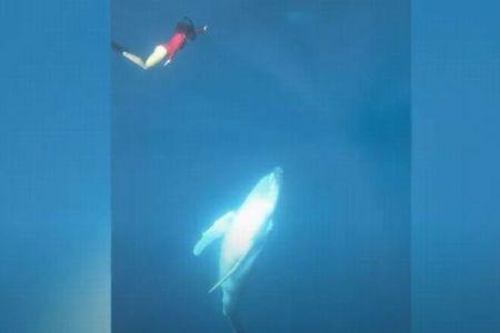 フリーダイバーが巨大なクジラと遭遇、ゆっくり接近する映像がダイナミック