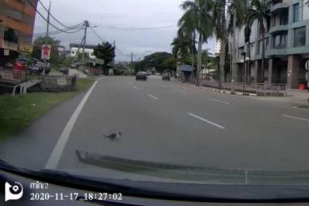 道路上に現れた子猫が突然消えてしまう、その後の展開が意外すぎる