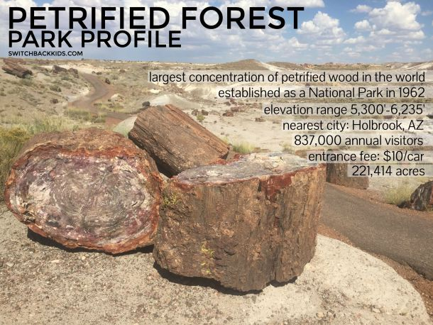 Petrified Forest Park Profile