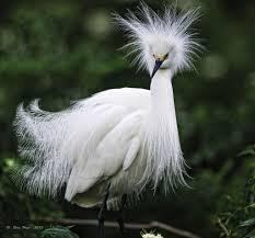 w- egret