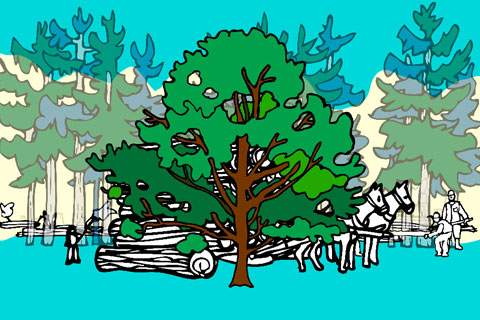 """""""These pine trees are crowding me!"""""""