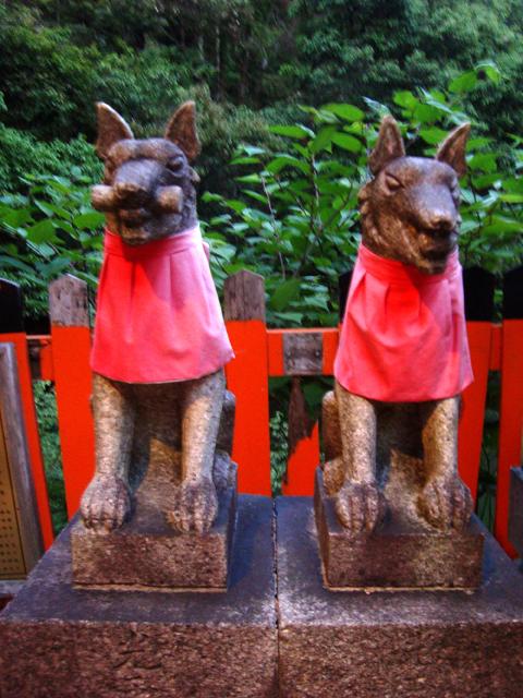 11_inari foxes