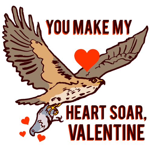 Hawk and pigeon valentine