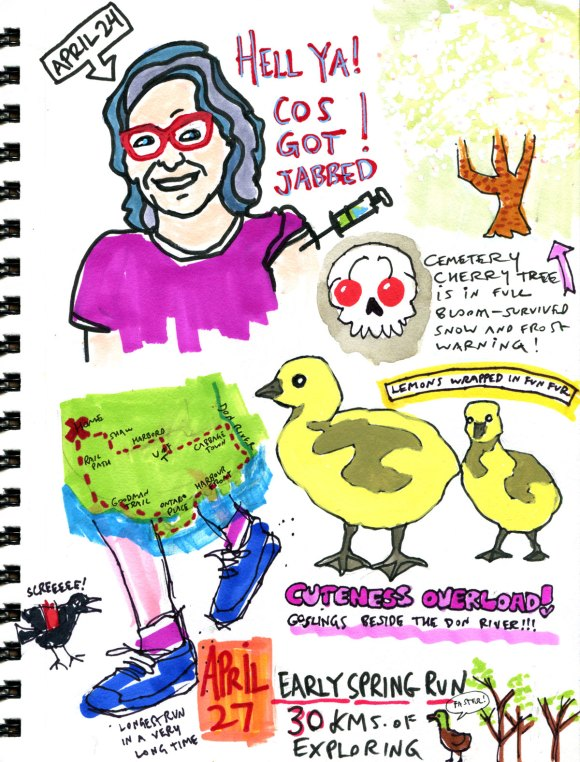 My Pandemic Diary 2 page 51 running, goslings, vaccines, spring