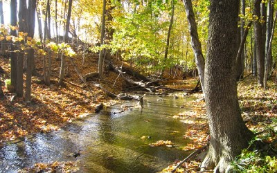 Wray Property Conserved by SWMLC and Ducks Unlimited Collaboration