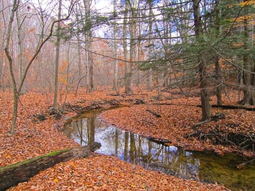 Black River Preserve