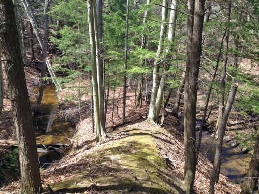 Eastman Creek Preserve