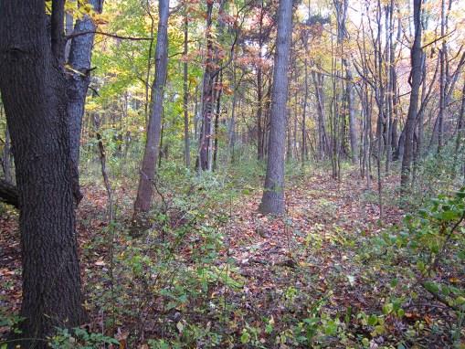 Oak Braes Preserve