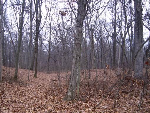 Schellenberg Woods