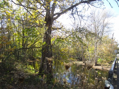 Wanondoger Creek Preserve