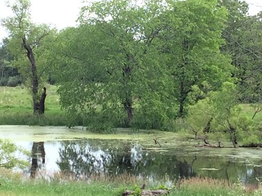 A pond at Big Marsh Farm Conservation Easement