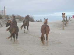 north beach, Assateague Is.