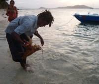 Kofferfische anlocken mit Lobsterbeinchen