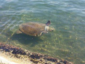 Barbara, die Schildkröte