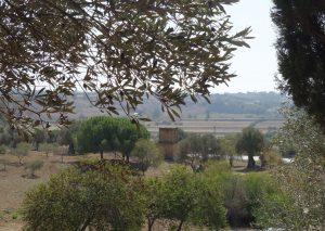Blick auf den Pferdefriedhof