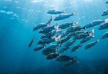 Photo of بسبب فايروس كورونا وزير الزراعة التركي يعلن حظر صيد الأسماك في البحار