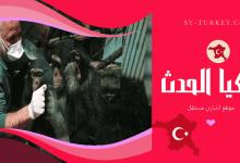"Photo of حديقة ""فاروق ياتشين"" للحيوانات تنعم بالهدوء في غياب الزوّار"