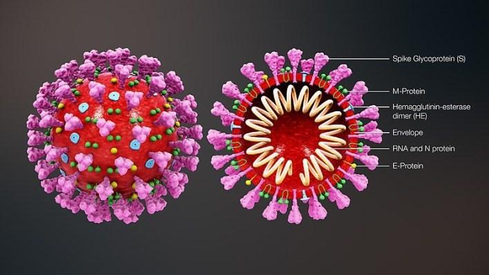 1583719945 5e65a6093d3fb - مفاجأة.. فيروس كورونا قد يمتد لـ27 يوما داخل الجسم