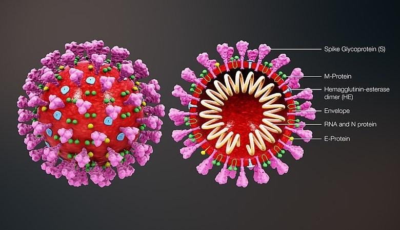 تجاوز العدد الإجمالي للمصابين المسجلين بفيروس كورونا المستجد (كوفيد 19)،