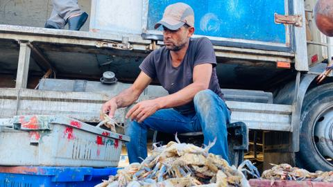 9513993 3991 2247 36 58 - السلطعونات.. فاكهة أهالي غزة البحرية ومصدر رزقهم