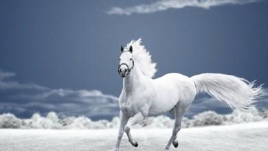 صورة 10 حقائق غريبة و مدهشة عن الخيول تعرف معنا عليها