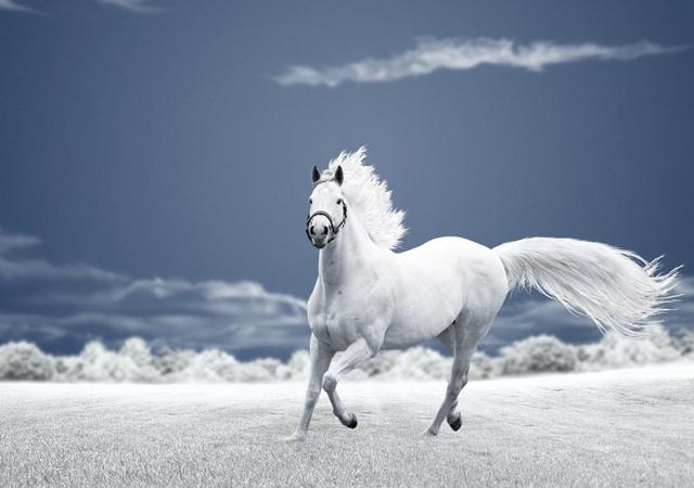Running free by Caras Ionut - 10 حقائق غريبة و مدهشة عن الخيول تعرف معنا عليها