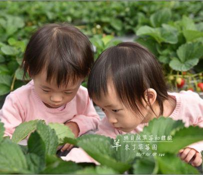 【南投國姓】 羊來了草莓園 | 歡樂的親子時光