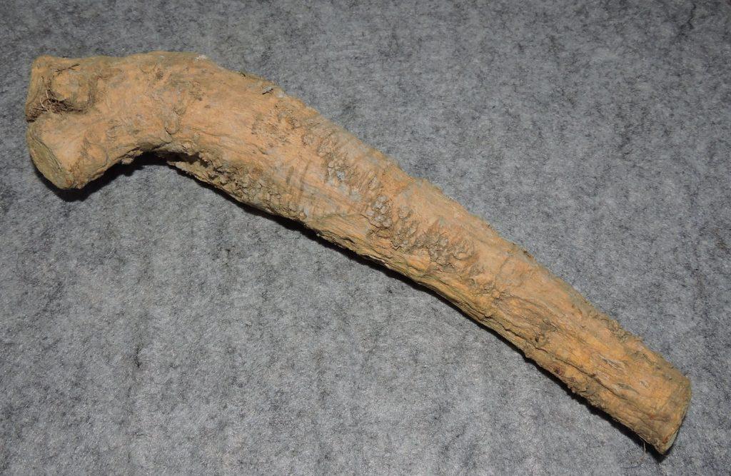 A Horseradish Root