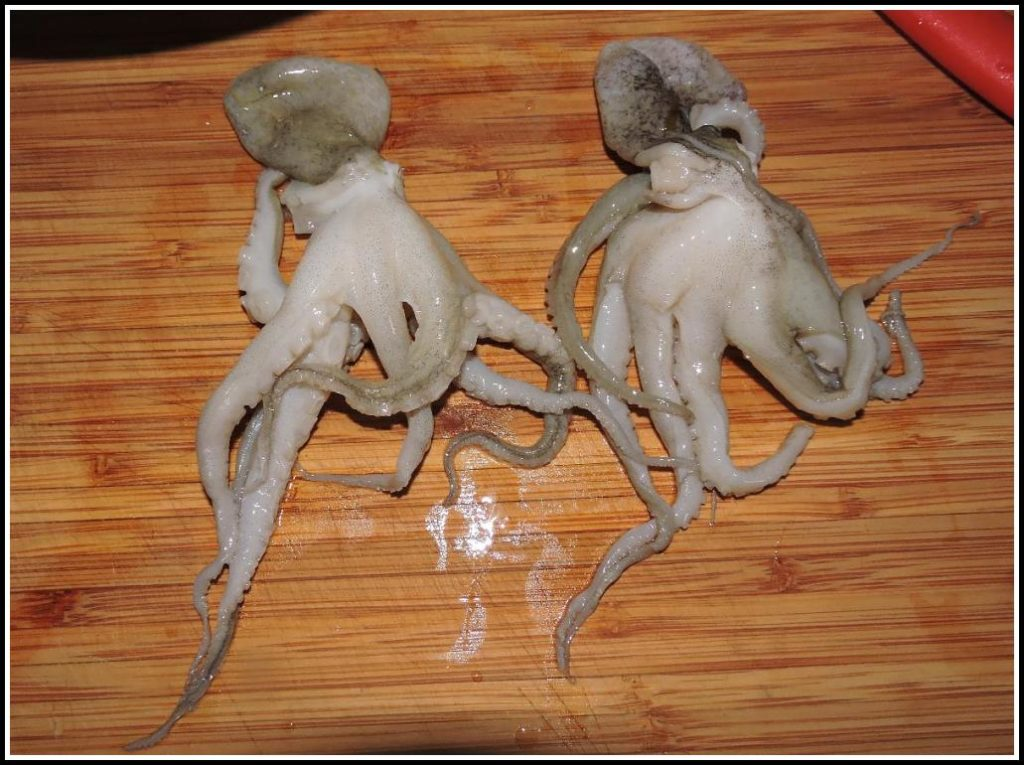 Two Very Small Octopuses