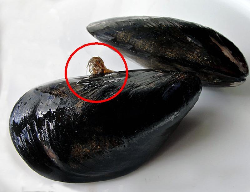 Debearding Mussels