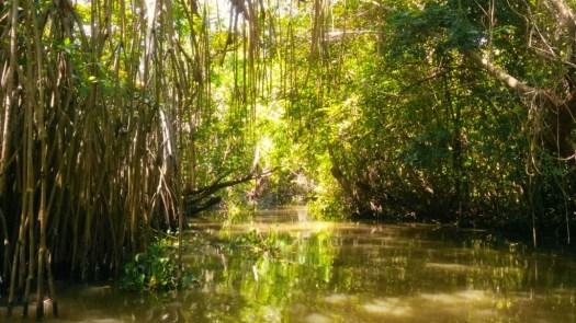 swamp of Tabasco Mexico