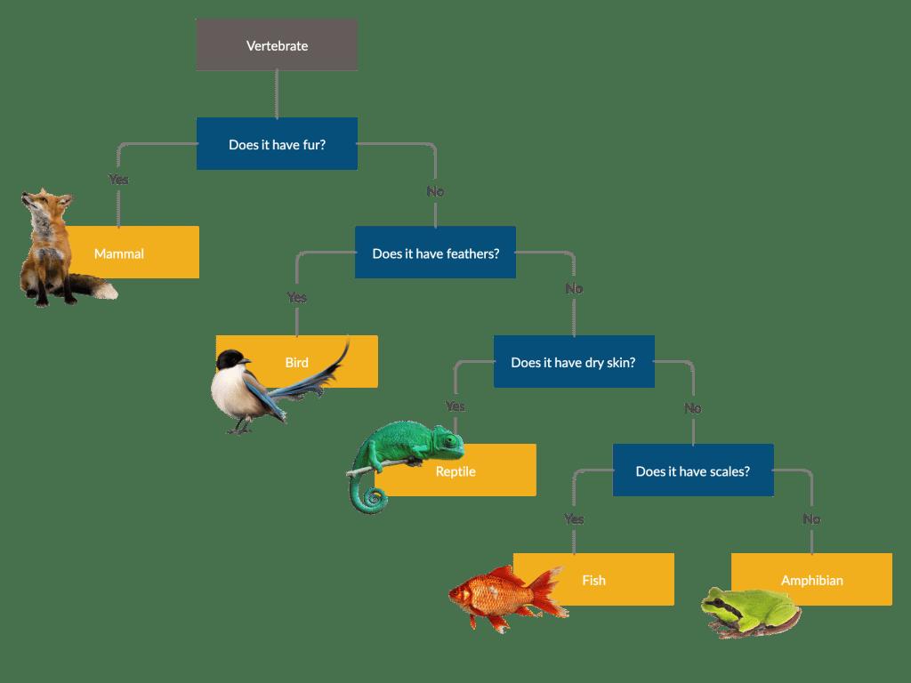 Science Classification Keys