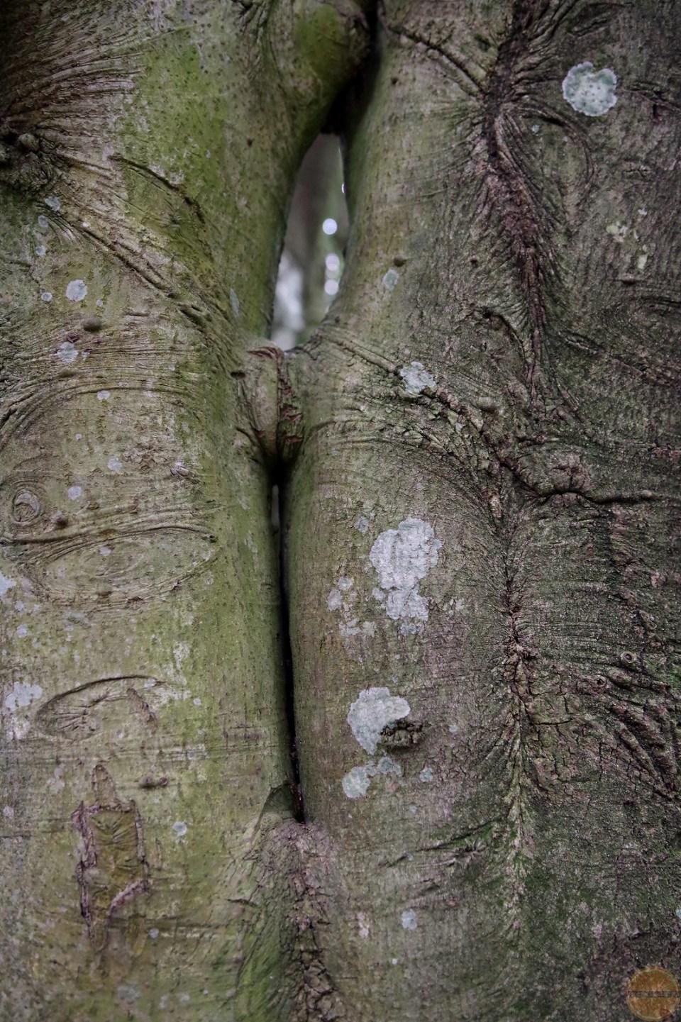 pnie drzew