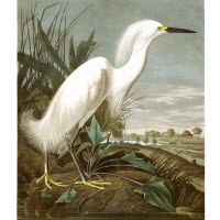 ARTIST JOHN JAMES AUDUBON