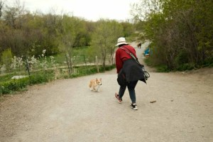 Etobicoke Valley Dog Creek - main area and side path to the left immediately after entering the dog park