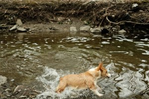 Etobicoke Valley Dog Park - Trail Images