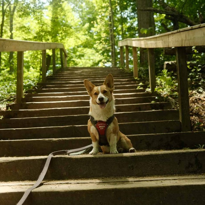 Dog-Friendly Guide to Bronte Creek Provincial Park