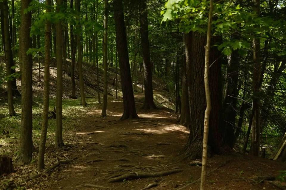 Half Moon Valley Forest Terrain at Bronte Creek Provincial Park