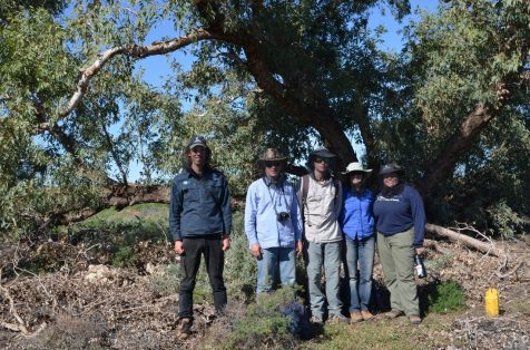 Members of a field team on a recent (June 2019) field trip to Ethabuka Reserve, Simpson Desert, standing under the shade of an old coolibah tree. Left to right: James Vandersteen, Stephen Sarre, Ryan Sarre, Jacqui Meyers and Dara Albrecht. Photo: Chris Dickman
