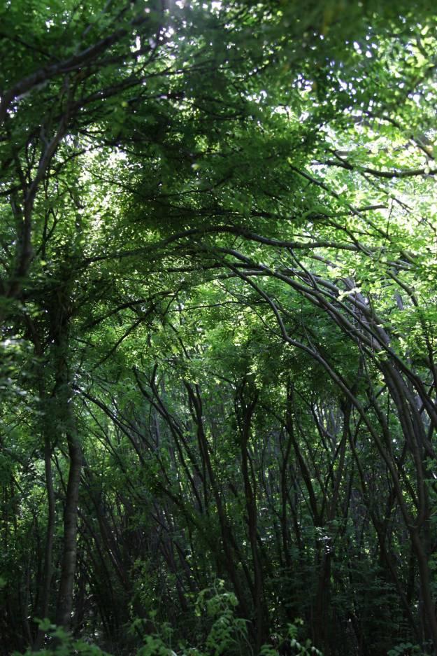 grn-canopy