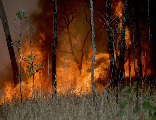 Burning as Land Management