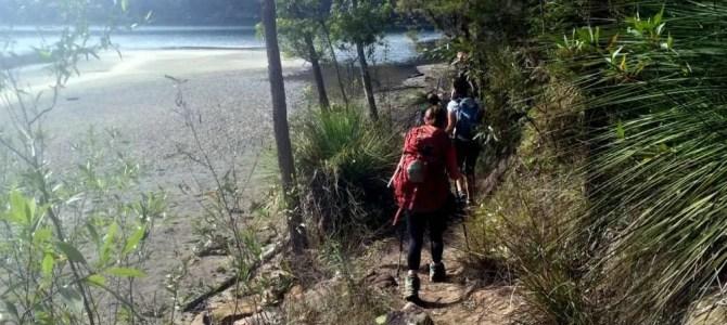 Berowra to Mt Ku-ring-gai: Waratah Bay path