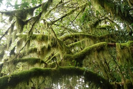 Moss dripped from the trees
