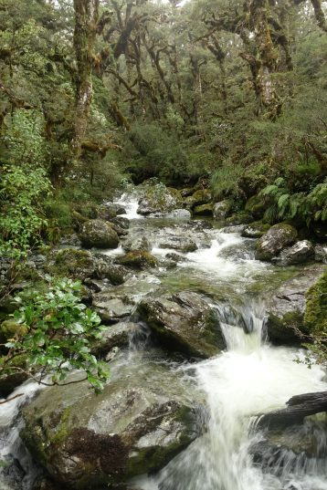 More streams on the Routeburn