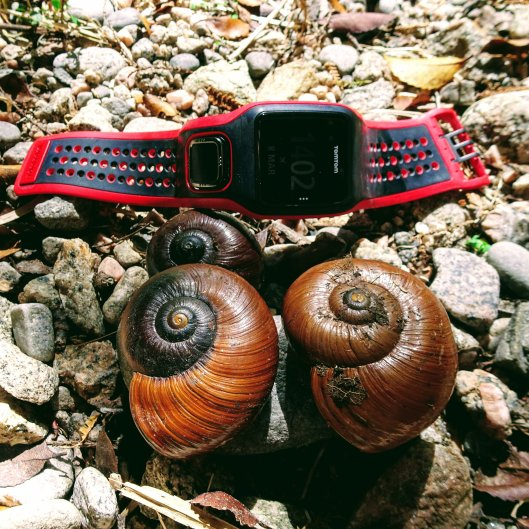 Heaphy Track Snails