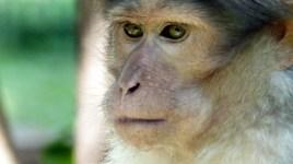 Les singes - tellement humains - se mêlent à la foule.