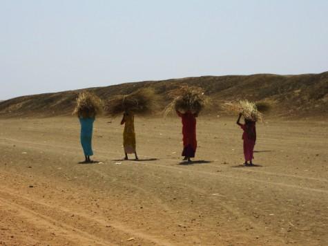 Sudanske damer samler strå for fletting!