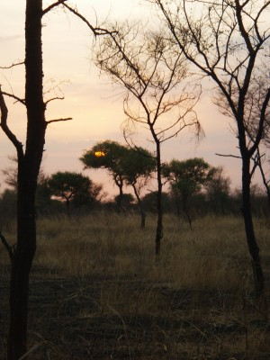 Det er solnedgang og like før min EFI - status ryker!