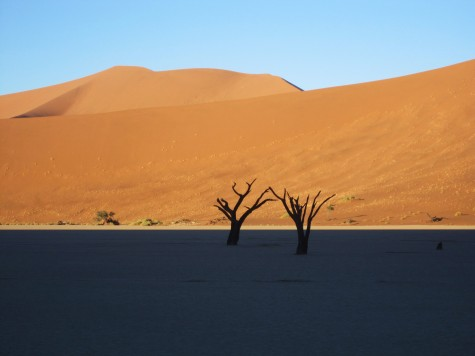 Flotte sanddyner i den namibiske ørken!
