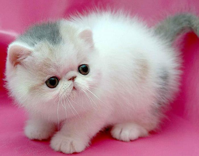 Какое красивое и интересное имя дать котенку. Поможем выбрать имя кошке: научный подход к проблеме Двойные клички для кошек
